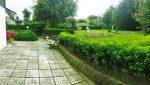Palm rise rear garden