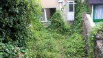 rear garden 2 49 mccurtain st
